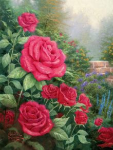Perfect Red Rose, A