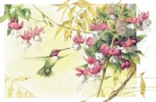 Whispers of a Hummingbird